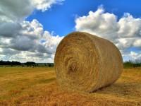 Politika prema selu – Kako dalje?